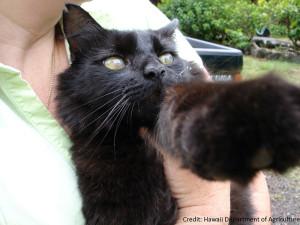 Cat-clouded-cornea-1